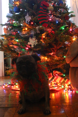 Gipper's First Christmas (7)