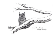 Great Horned Owl Jan 8, 87 (evtkw) Tags: pen ink drawing owl greathornedowl owldrawing evtkw