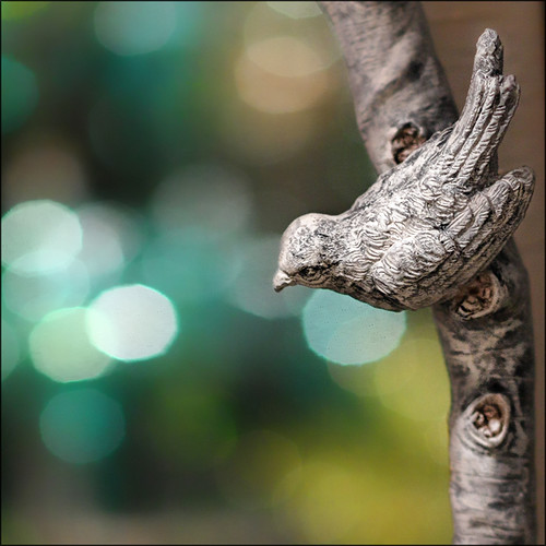 Bird-branch-bokeh