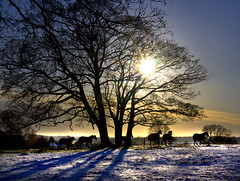 Horses at Sunset (Theresa Elvin) Tags: trees sunset horses snow countryside fields nottinghamshire topseven suttoncumlound natureselegantshots saariysqualitypictures mygearandmepremium