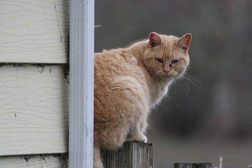 On The Fencepost