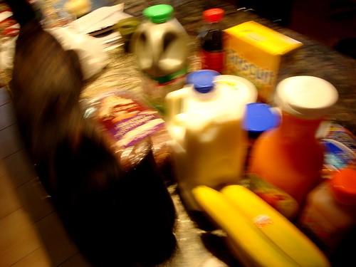 gato_groceries