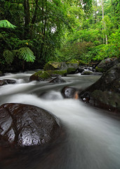 Curug Macan 2 (syukaery) Tags: longexposure trees green nature water leaves forest river indonesia landscape waterfall nationalpark flora nikon stream angle wide tokina jungle plantation lush westjava sukabumi slowspeed halimun macan salak d80 curug