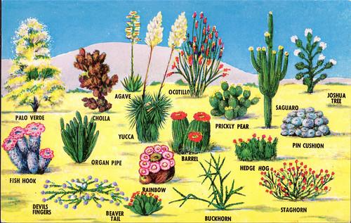 desert plants postcard