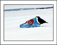 Street / Bagage (Theo Kelderman) Tags: street people snow black bird haarlem netherlands canon bag sneeuw nederland plastic tas zwart bagage vogel 2010 schalkwijk straat mensen kraai theokeldermanphotography