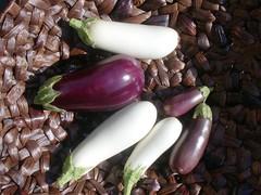 Eggplants-9902