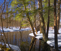 Meandering (Nicholas_T) Tags: trees winter snow creek forest stream hiking pennsylvania brightlight creativecommons poconos sprucerun pikecounty coniferous hemlocks delawarestateforest tsugacanadensis easternhemlocks thunderswamptrail