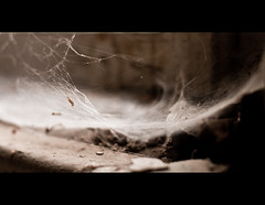 Abandoned (Mighty Maik) Tags: bokeh spiderweb keizer maik beelitz