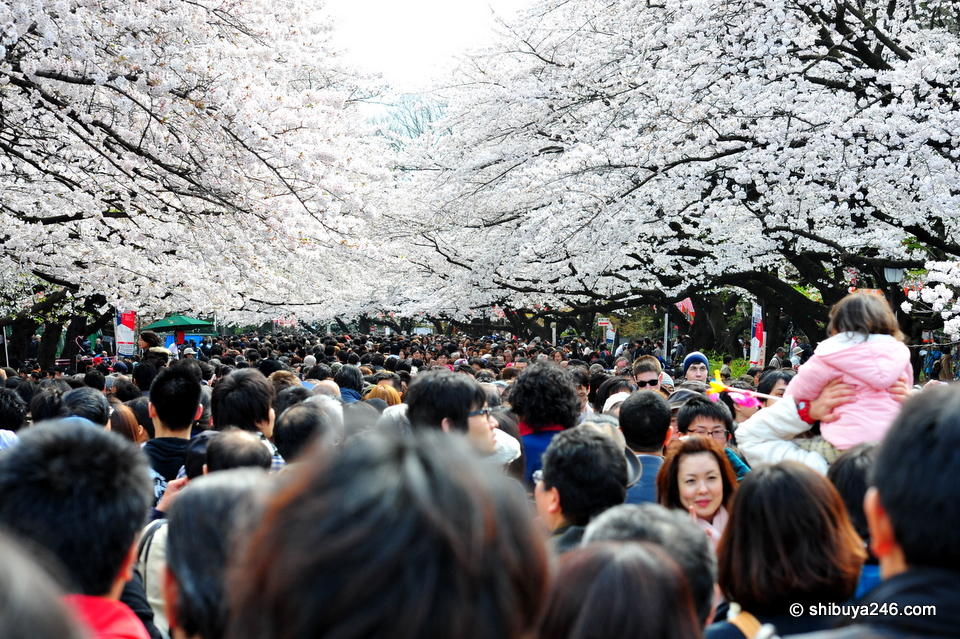The crowds always come to Ueno Park to see the sakura at this time of year. On a fine, day like today, it can be very busy.