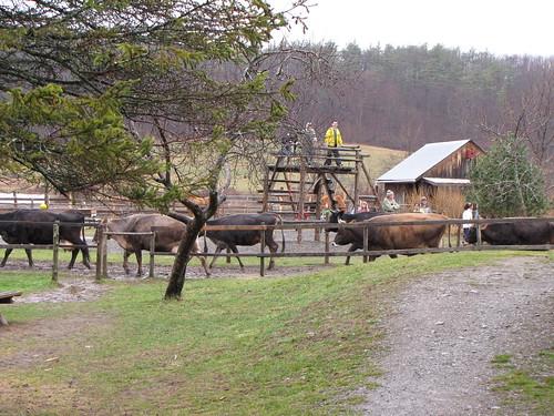 farm playground 1