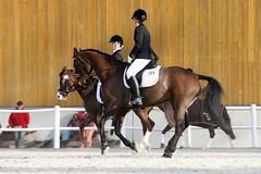 Jogging Shoes for Horses (Equine Fusion) Tags: horses boots bat even equine stepup feelinggood horseboots horsehaircloththatwasusedtogivestiffnesstofabricdailydoublebettingjargondarkdayabaddaydarkhorseanunknowndeadheatveryclose cropawhipforahorsestraightfromthehorsesmouthtoheartherealscoopfromthesourcethatknowstherealdealortruestorystubbornasamulemuleshavedispositionsthatarequitemoodyandoftentheywillrefusetoworkinfact theyoftenjustlaydownandwillnotgetuptackhorseequipmenttheoldgreymaresheaintwhatsheusedtobegettingolderandslowingdowntrifectaracingjargonyoucanleadahorsetowaterbutyoucantmakehimdrinkyoucanshowtheway butcantmakesomeonedosomethingtheydontwanttodowildgoosechaseoriginallythissayingcamefromanequestriansportthatwasstartedinirelandithascometomeanthatsomeonelooksforsomethingthatdoesnotexistalso itcanmeanajourneyorsearchwithoutpurpose