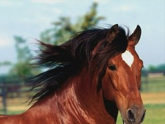 Horses (Luigi Strano) Tags: horses animals cheval video slideshow cavalli animali videos windowsmoviemaker photostory3 90sec slideshowwithmusic