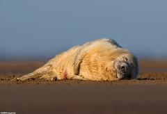 New Life (Craig Jones Wildlife Photography) Tags: beach nature wildlife soe coth anawesomeshot colorphotoaward craigjones flickraward