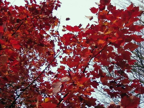 Red leaves filled the sky above