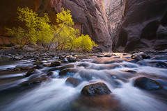 Narrow Light (Mike Hornblade) Tags: fall fallcolor zionnationalpark narrows virginriver virginrivernarrows variosonnar163528za