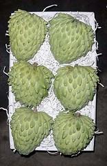 FPM338 Atemóia (Fernando Picarelli Martins) Tags: frutas annonasquamosa pinha ata atemoya cherimoya frutadoconde annonacherimola atemóia annonacherimolaxannonasquamosa atemola cherimolier