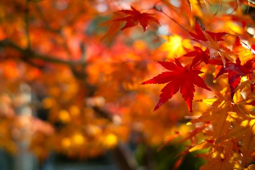 東寺庭園紅葉
