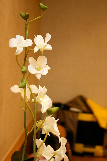 Live orchids a nice touch