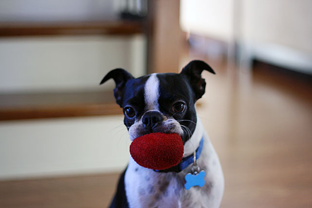 kosmo and the red ball