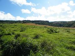 DSCF5195 (dnymud) Tags: hawaii maui kapalua ziplines
