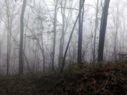 Wandering Ruffner Mountain. acnatta/Flickr