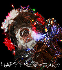 Happy New Year!!! (faith goble) Tags: christmas friends light rescue dog art festive happy artist photographer kentucky ky creativecommons poet newyearseve writer cockerspaniel 2009 bowlinggreen 2010 bowshot faithgoble gographix faithgobleart