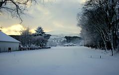 7th TEE () Tags: snow cold scenic frosty fresh firstsnow snowfall isleofman ramsey mywalktowork