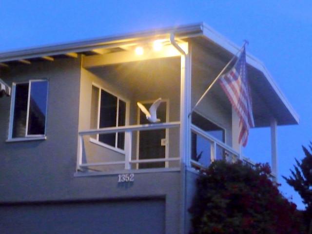 Patrick Nouhailler visiting Laguna Beach 1-3-2010 12-17-21 PM
