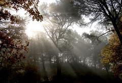 Lumires sur la Sainte-Victoire - Bouches-du-Rhne (Charlottess) Tags: paca provence rayon fort brume bouchesdurhne saintevictoire provencealpesctedazur