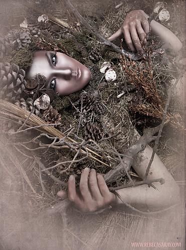 El alma del bosque