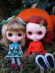 Hello, we are pumpkin.