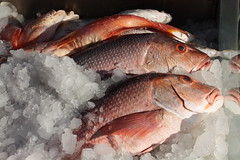 Red Sea Fishes (X'ian) Tags: dahab redsea egypt gypten sinai egypte merrouge sina masbat rotersee