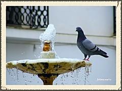Zafra (Badajoz) fuente-2 (ferlomu) Tags: agua fuente paloma badajoz zafra ferlomu