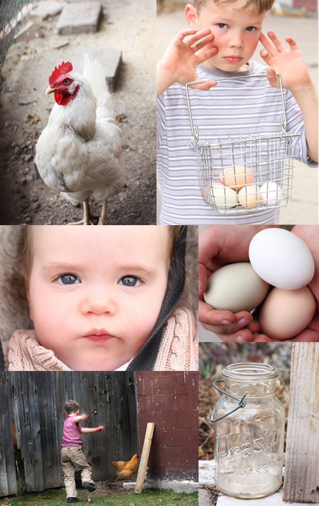 chickens-montage