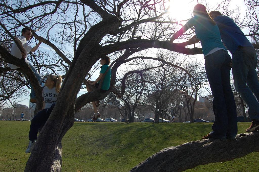 climbing trees pt 2