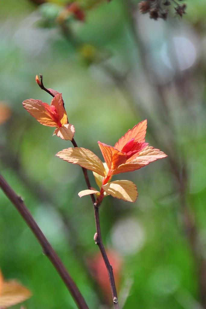 leafy flower