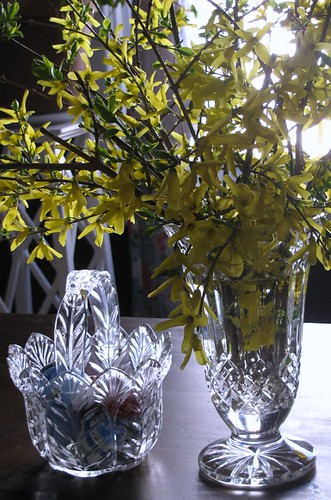 forsythia basket