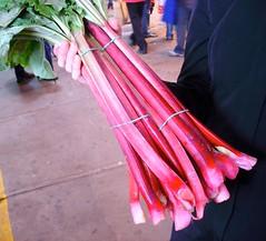 jean-talon rhubarb