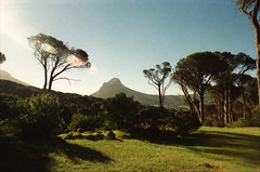 Cape Town South Africa Deer Park Table Mountain Dec 1998 068 (photographer695) Tags: africa park mountain table south capetown dec deer 1998