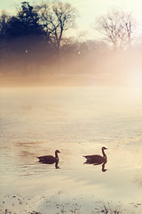 Enjoying Some Thaw (DaveLawler) Tags: thaw february warm morning sunrise park elmpark worcester massachusetts weather fog foggy mist canadian geese