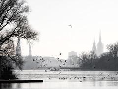 perfect day to feed seagulls (Paul und Lotte) Tags: hamburg deutschland norddeutschland landschaft möwen alster see fluss ausenalster gegenlicht winter germany alsterlake outeralsterlake lake backlight seagulls