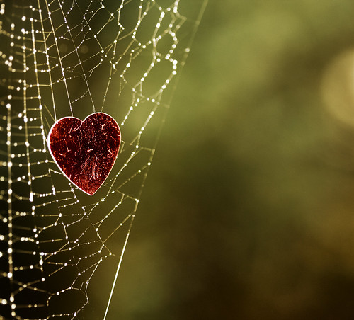 The best bits of MY web (Image by Niffty on Flickr)