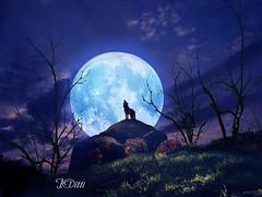 Night of full moon (Vitti jose) Tags: moon lua lobo cheia luar nightoffullmoon great123 ahoradolobo vittijose josevitti
