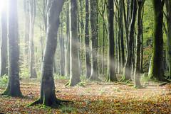 Autumn Light (Dan Baillie) Tags: wood autumn trees light sun leaves forest scotland nikon galloway puddock wigtownshire danbaillie bailliephotographycouk bailliephotography wigtownshirephotographer dumfriesandgallowayphotography