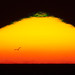 Sunset with small green flash and a gull bird flying forming a silhouette in front