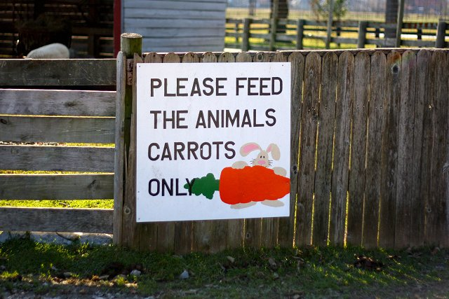 carrots only