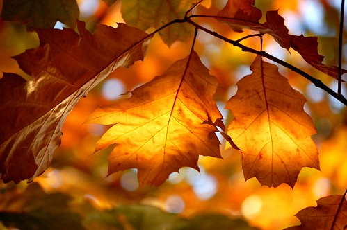 Sunlight in the Leaves.....