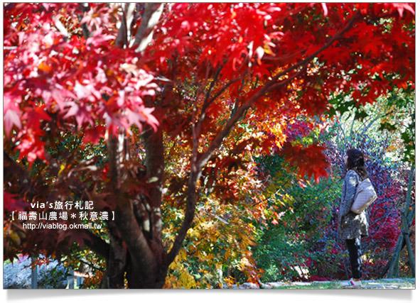台灣的賞楓聖地-福壽山農場