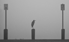 Foggy Solomons Island Morning