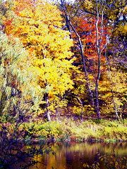 Photographic Painting (Musical Mint) Tags: autumn trees toronto ontario canada colour fall nature beautiful leaves outdoors highpark colours branches helluva musicalmint impressedbeauty